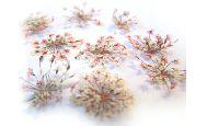 Suszone kwiaty 12 szt